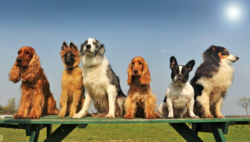group of dogs sitting on a bench
